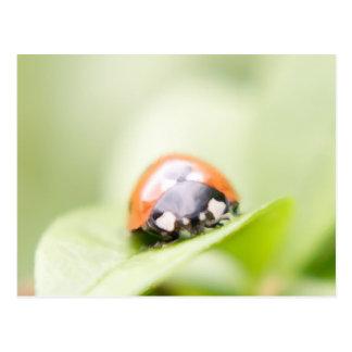Ladybug by Tutti Postcard