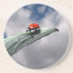 Ladybug Calm Before the Storm Coaster