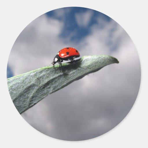 Ladybug Calm Before the Storm Sticker