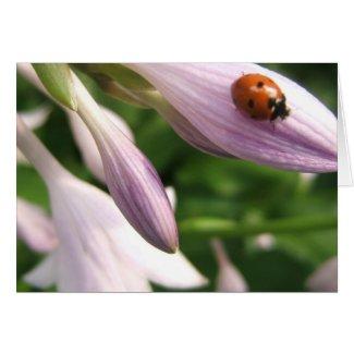 Ladybug Card