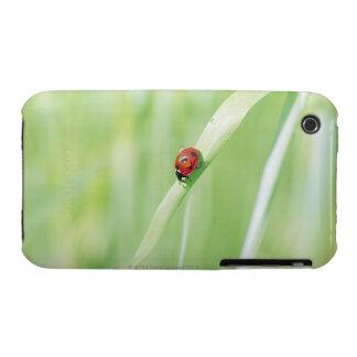 Ladybug iPhone 3 Cases