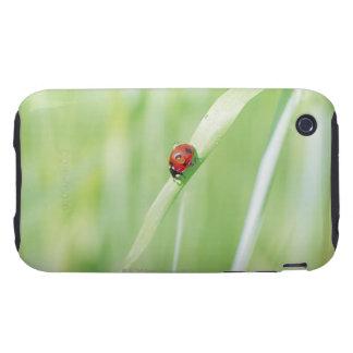 Ladybug iPhone 3 Tough Case