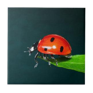 Ladybug Ceramic Tile