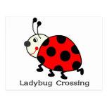 Ladybug Crossing Postcard