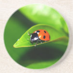 """Ladybug Drink Coaster<br><div class=""""desc"""">ladubug opnieyw ladybug ladybugs lady bug bugs insect insects green red black dots dotted</div>"""