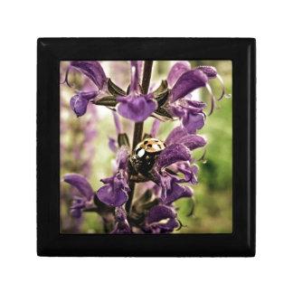 Ladybug Gift Box