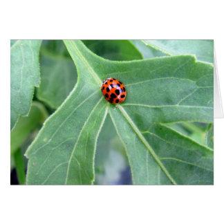 Ladybug  - Greeting Card