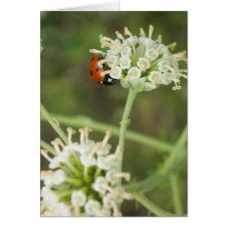 Ladybug Greeting Card 01