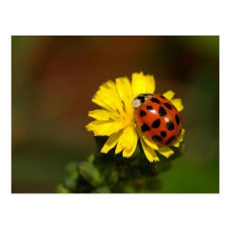 Ladybug Greetings Postcard