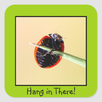 Ladybug Hang In There Square Sticker