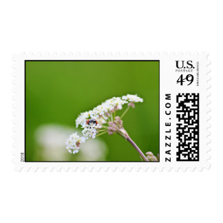 Ladybug Hiding Postage