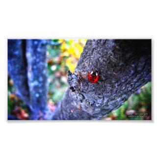Ladybug in a Cherry Tree 1 Photographic Print