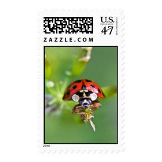 Ladybug in close up postage
