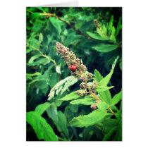 Ladybug in Spring Card