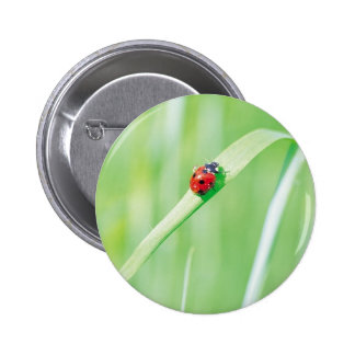 Ladybug in the Grass 2 Inch Round Button