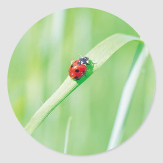 Ladybug in the Grass Classic Round Sticker