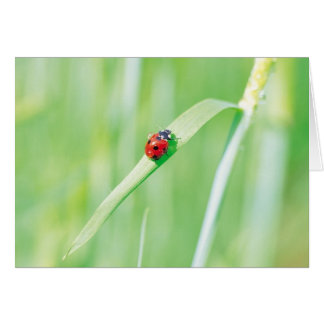 Ladybug in the Grass Greeting Card