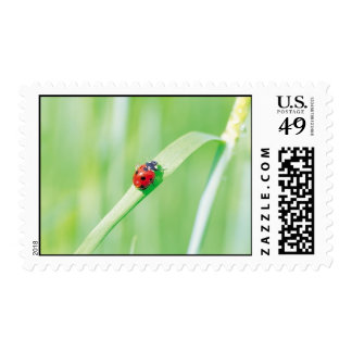 Ladybug in the Grass Postage Stamp