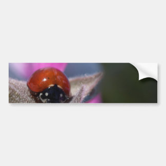 Ladybug Insect Bumper Stickers