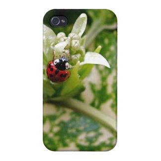 Ladybug iPhone 4/4S Case