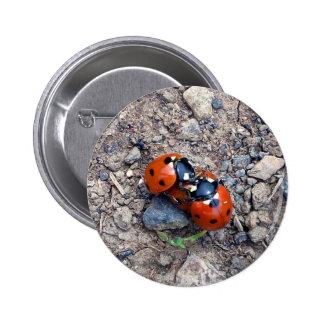 Ladybug Kisses Buttons