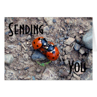 Ladybug Kisses Cards