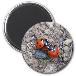 Ladybug Kisses Refrigerator Magnets