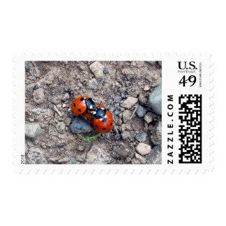 Ladybug Kisses Postage Stamp