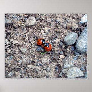Ladybug Kisses Poster