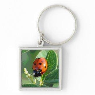 Ladybug Ladybug Keychain keychain