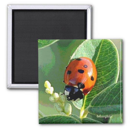 Ladybug Ladybug Magnet