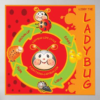 Ladybug Life Cylce Poster for Kids