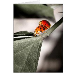 Ladybug Love! Card