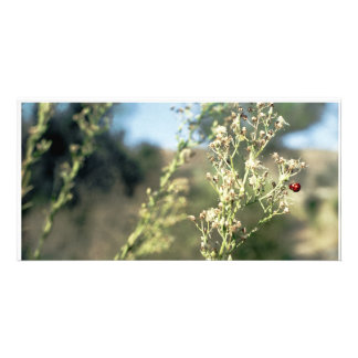 LadyBug Love Cards Picture Card