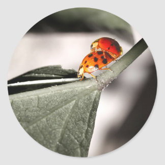 Ladybug Love! Classic Round Sticker