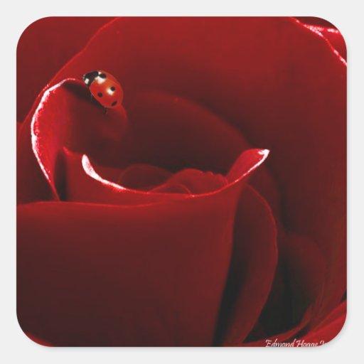 Ladybug Love Square Stickers