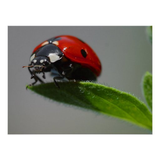 Ladybug Lovers Gifts Posters