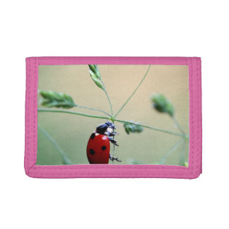 Ladybug Luck Custom Personalize Anniversaries Tri-fold Wallets