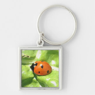 Ladybug Lydia Resting On The Swiss Chard Silver-Colored Square Keychain
