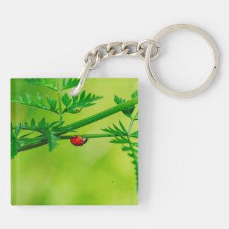 Ladybug macro acrylic keychain