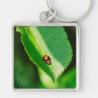 Ladybug macro keychain