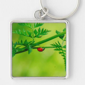 Ladybug macro key chain