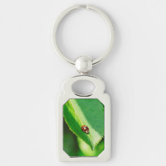 Ladybug macro key chains