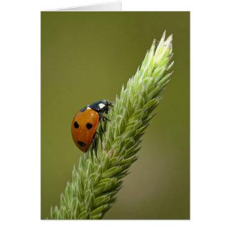 Ladybug Messenger Cards