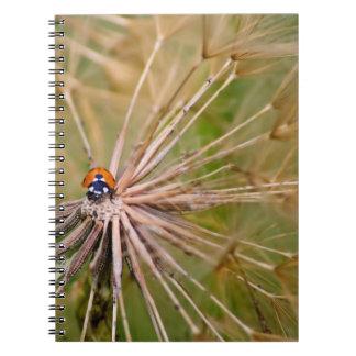 Ladybug Journals