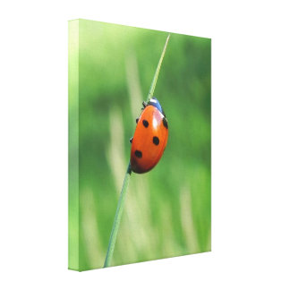 Ladybug on a blade of grass Canvas Print