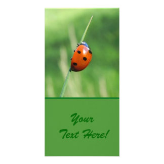 Ladybug on a blade of grass card