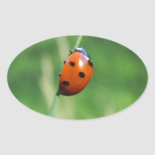 Ladybug on a blade of grass oval sticker