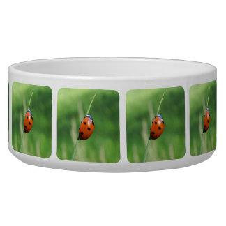 Ladybug on a blade of grass  Pet Bowls