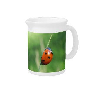 Ladybug on a blade of grass pitcher